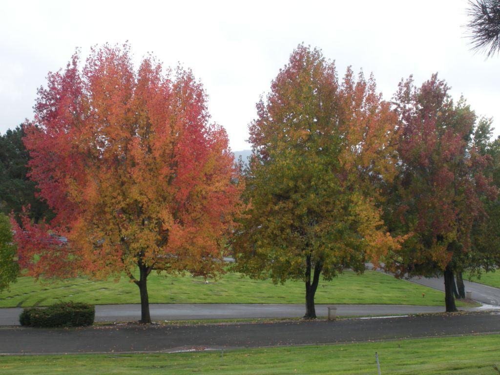 Rolling Hills Memorial Park Flat Memorial Lawns
