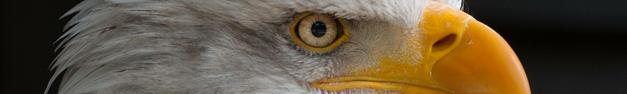 Eagle-008