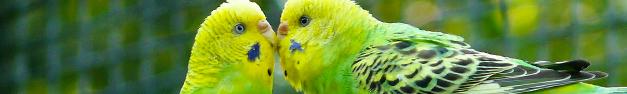 Birds-080
