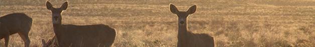 Deer-060