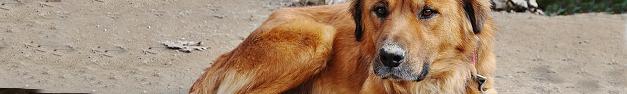 Dog-125