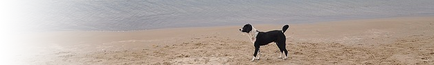 Dog-274