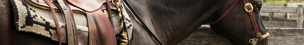 Horse-382