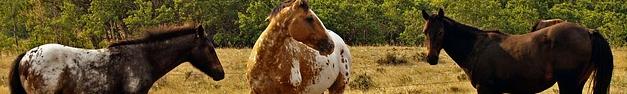 Horses-058