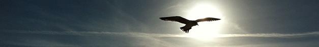 Soaring-Eagle-375