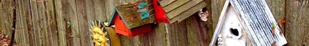 Birdhouse-043