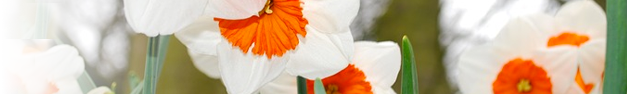 Floral-128