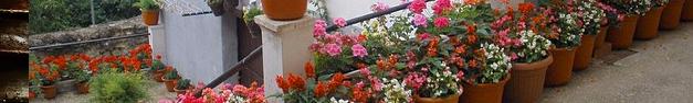 Garden-235