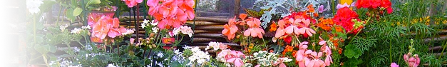 Garden-236