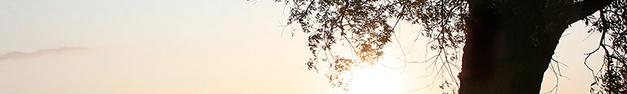 Tree-363