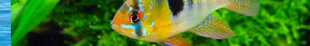 Tropical-Fish-276