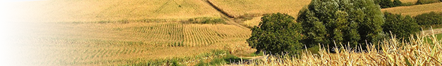 Rural-Field-342