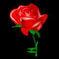 gesture rose