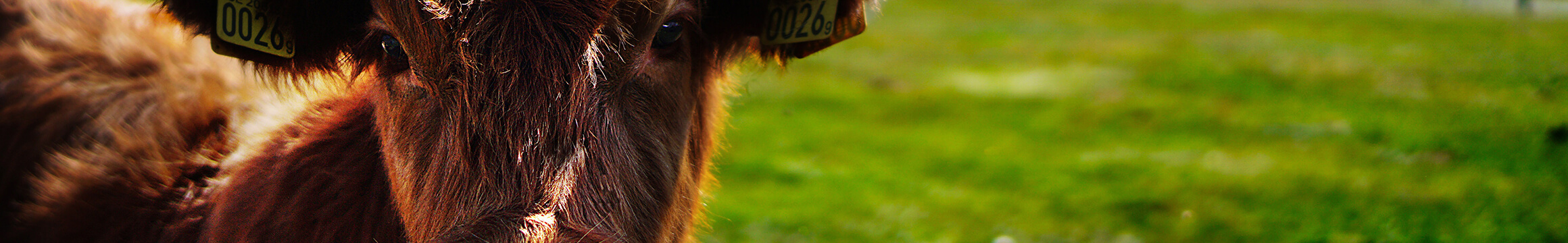 Farm Animals 02