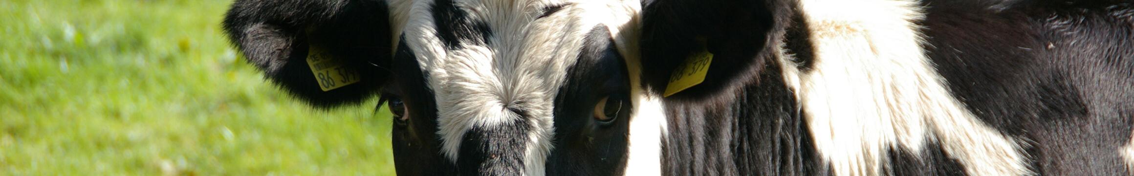 Farm Animals 16