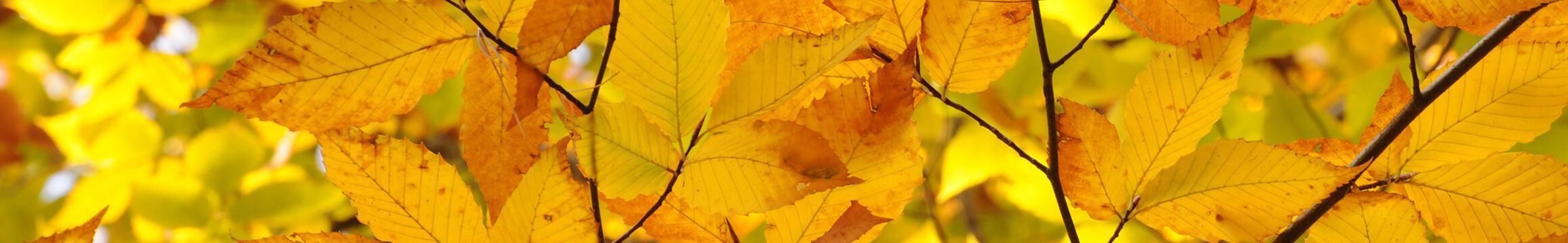 Nature 07