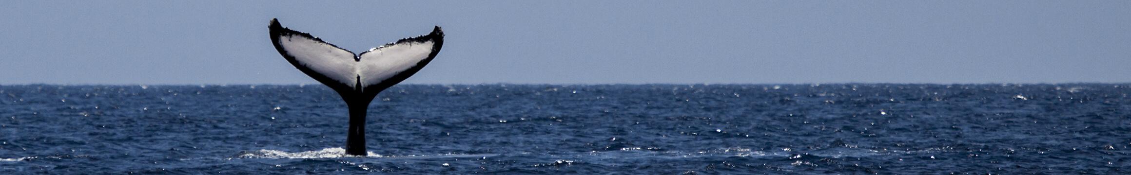 Scuba Oceanlife 09