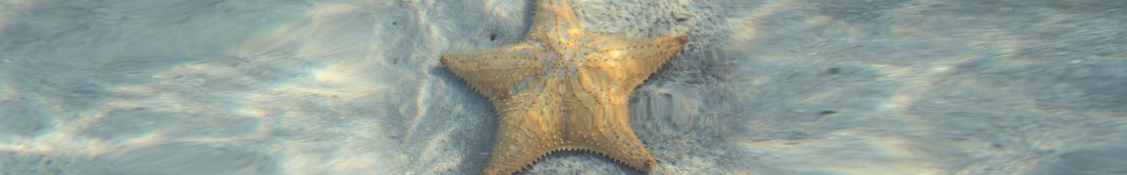 Scuba Oceanlife17