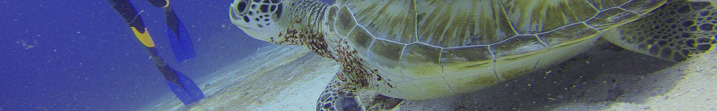 Scuba Oceanlife18