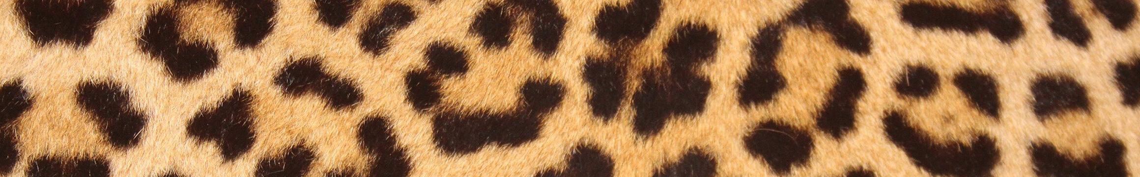 Animal Pattern 04