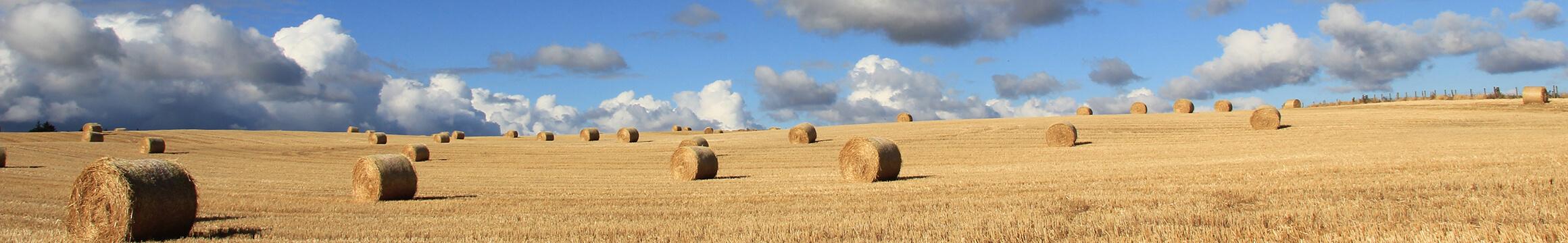 Rural 02