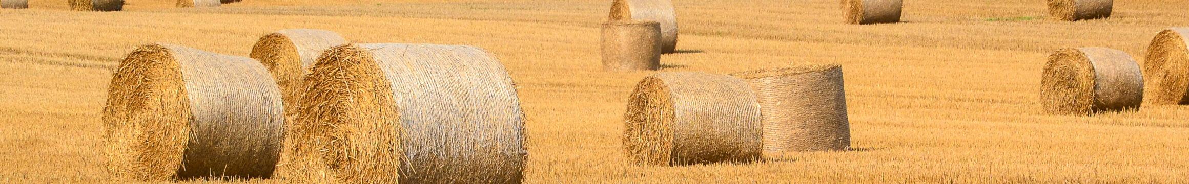 Rural 05