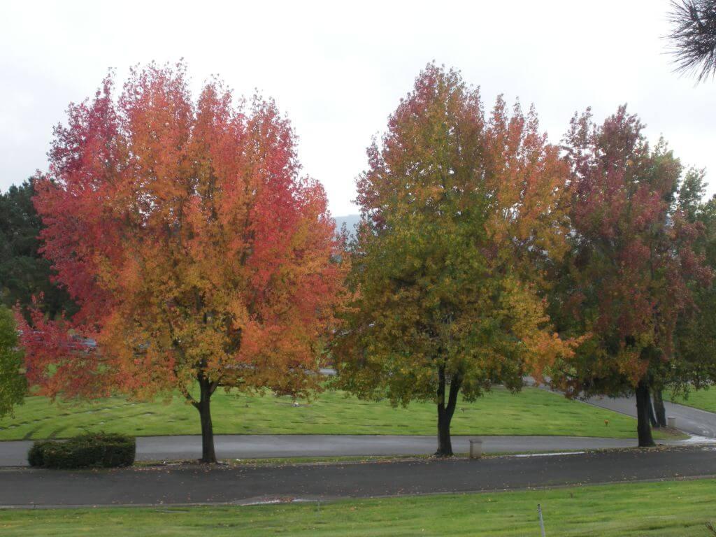 Flat Memorial Lawns 2