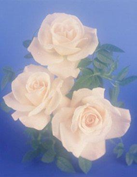 Bryan  Hardwick Flowers  Gifts