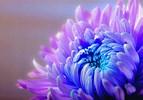 David Jeffery Florist