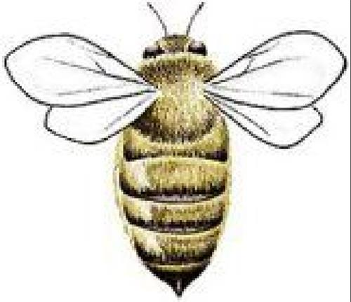 The Burt's Bees Products Company