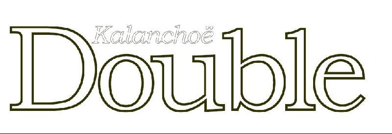 Kalanchoë Double