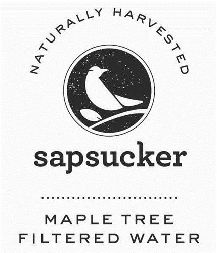 NATURALLY HARVESTED SAPSUCKER  MAPLE TREE FILTERED WATER
