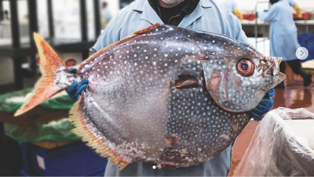 Ask An Expert: Maintaining the Quality of Fish for Your Restaurant
