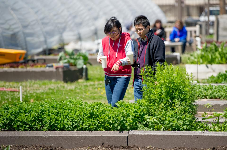 St. Jude employees enjoy a quiet stroll in the St. Jude Garden. This multi-acre garden features hundreds of raised beds tended by employee volunteers and a new fruit tree orchard, both of which supply produce for our cafeteria, the Kay Kafe.