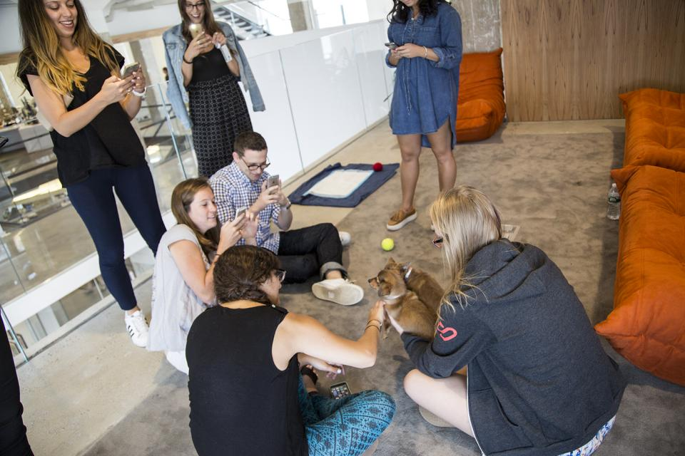 Each year we partner with a local animal rescue organization to bring adoptable puppies and kittens to the office!