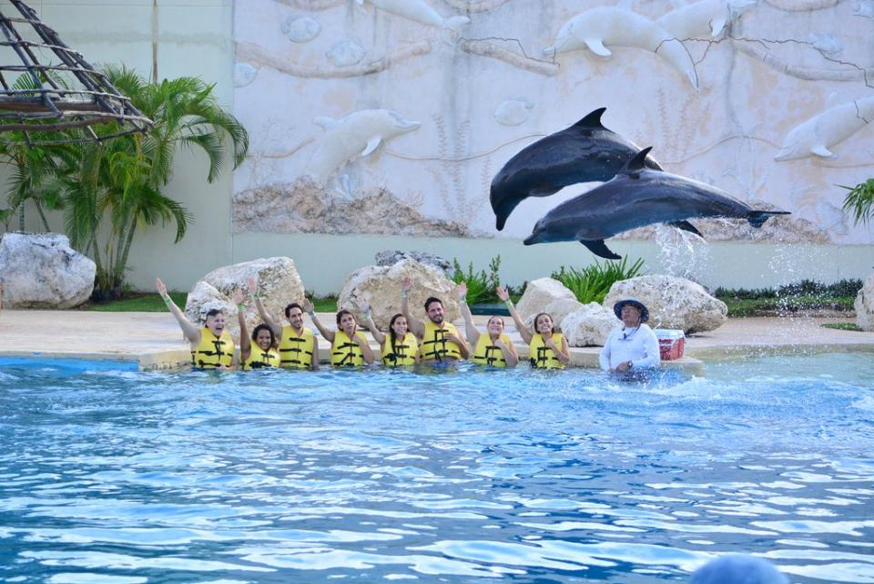 Expedia Local Expert team hanging with some dolphins