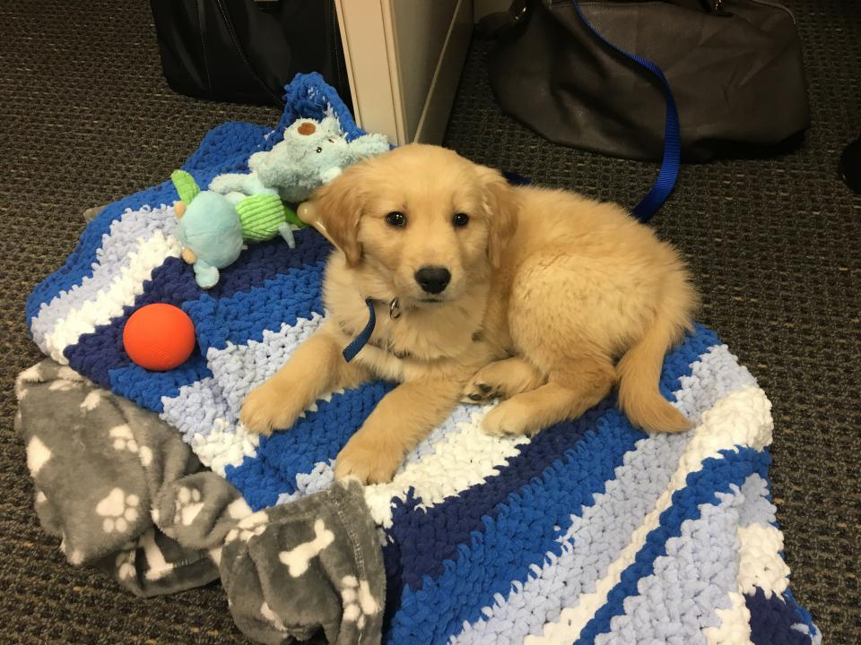 Our Office Dog Mac
