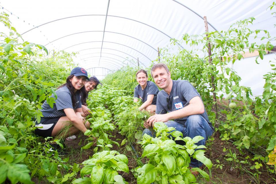 NI Volunteering Urban Roots