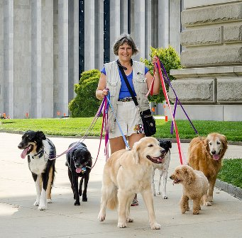 Image of: Animal Image By Jeff Salmore 3milliondogs Walking The Dogs Coping With Cancer Fears