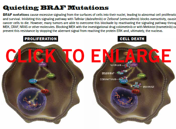 Quieting BRAF Mutations Illustration