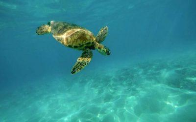 25 Datos Curiosos de las Tortugas que deberías saber
