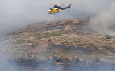 Un piloto salva 27 caballos de morir en un incendio forestal en España