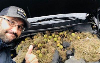 El 'extraño' hallazgo al abrir el capó de su auto tras detenerse por olor a quemado