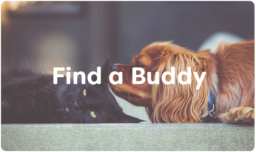 find-a-buddy