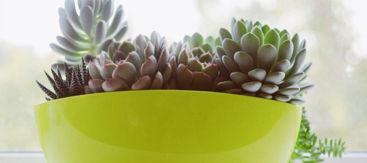 Succulents in green bowl