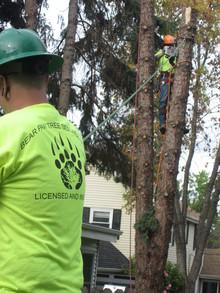 Bear Paw Tree Service Llc. Hard At Work T-Shirt Photo