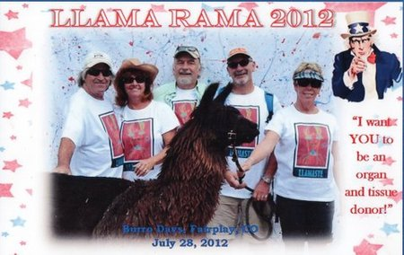 Llamaste   Llama Races 2012 T-Shirt Photo