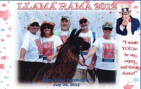 Llamaste   Llama Races 2012 T-Shirt Photo