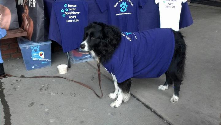 Even Dogs Can Help Raser Money For Cat Rescue! T-Shirt Photo