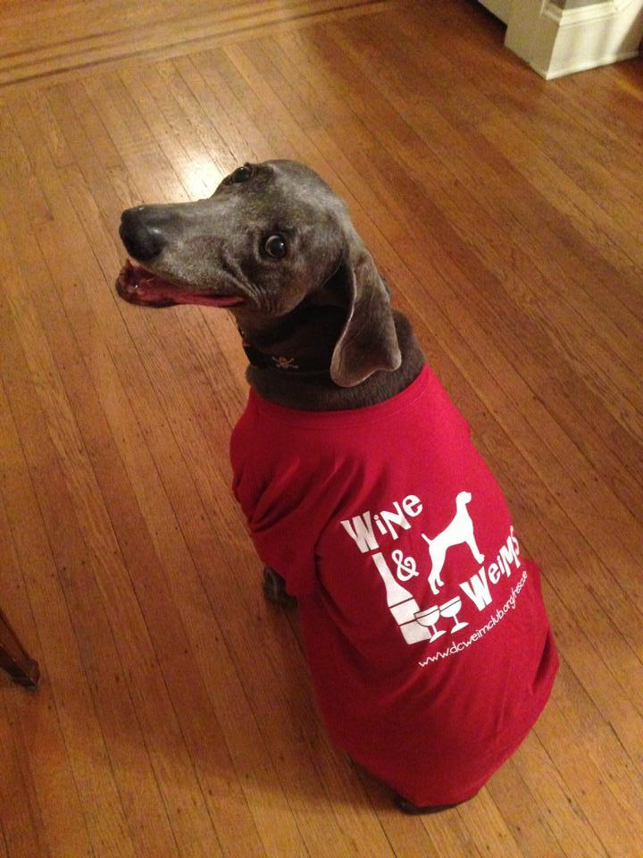 Josie ( A Rescued Weimaraner) Models The Fundraising Shirt! T-Shirt Photo